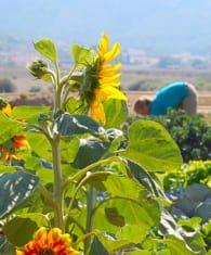 phần mềm quản lý cửa hàng vật tư nông nghiệp
